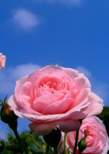 Вермонт ДВ - стабилизированные цветы